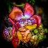 2Canon Ball Tree - ID: 14825068 © Richard M. Waas