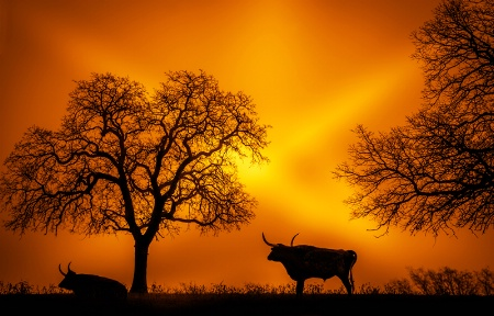 Photography Contest Grand Prize Winner - February 2015: A Dawn -- Good Morning