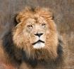 Kingly Portrait