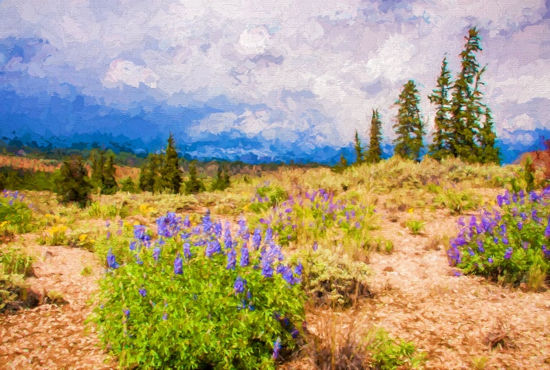 Colorado Lupine Scenic - ID: 14832610 © Sheila Babbie