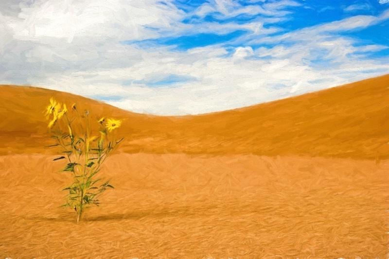 Great Sand Dunes - ID: 14833355 © Sheila Babbie