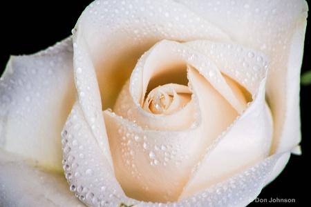 Basement White Rose 3-0 f lr 2-27-15 j118