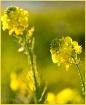 More Mustard
