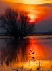 Wildlife Refuge a...