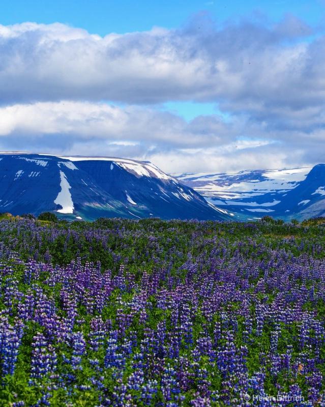 lilac views