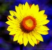 Paper Daisy and F...