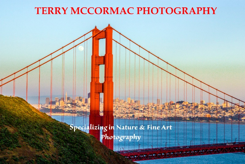 - ID: 14866838 © TERRY N. MCCORMAC