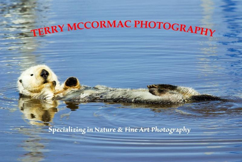 - ID: 14866842 © TERRY N. MCCORMAC