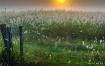 Sunrise Willows