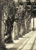 Vines and Columns