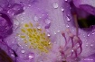 Water & Flower- T...