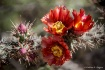 A Thorny Touch