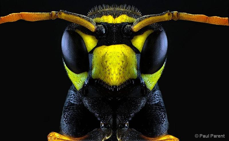 The Real Closeup Bee - ID: 14912673 © paul parent