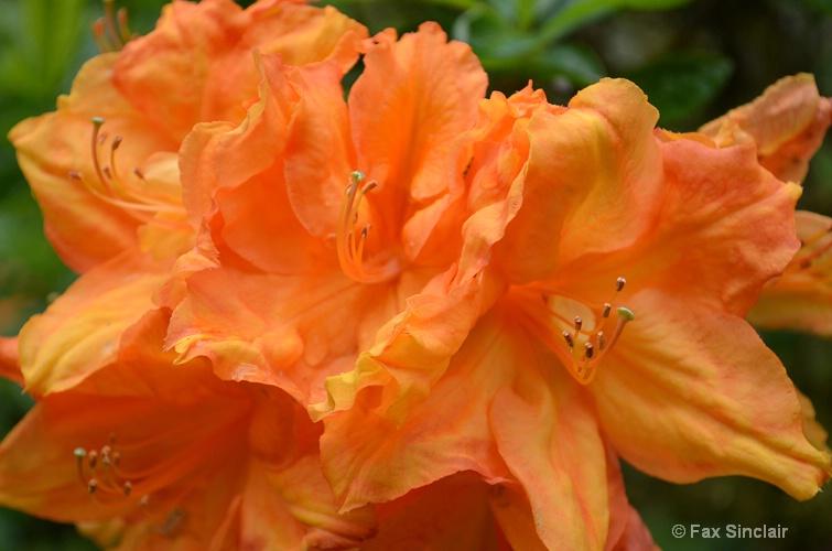 Orange  - ID: 14916394 © Fax Sinclair