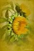 Vintage Sunflower...