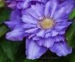 Garden Star - Cle...