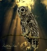 Young Owl In The ...