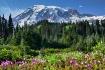 ~Mt Rainier~