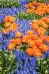 Tulips & Hyacinth...