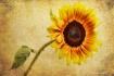 Bringing Sunshine