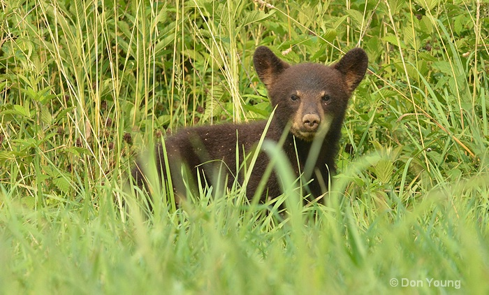 Little Cub - ID: 14931327 © Don Young