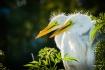 Egret Twins