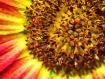 Intimate Flower