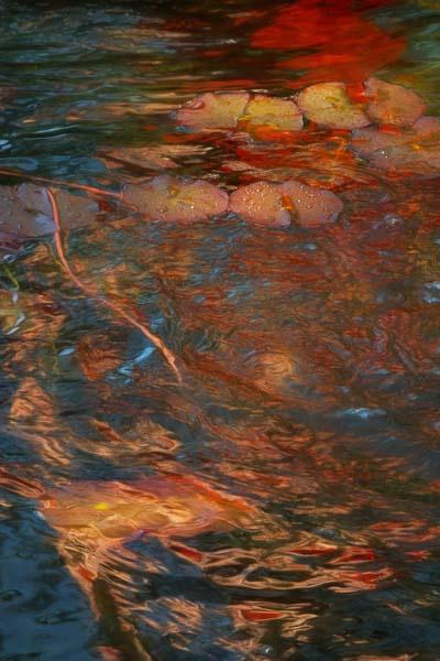 Swirling Fire - ID: 14958369 © Marilyn Cornwell