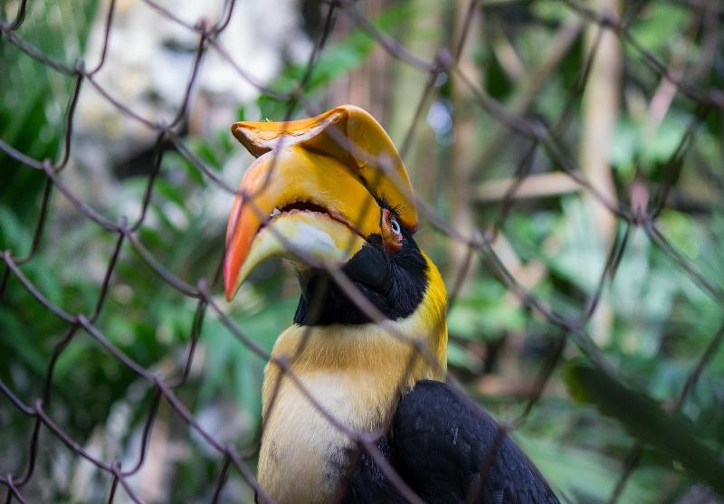 Bird behind wires