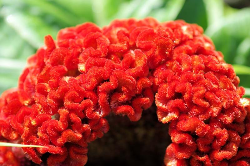 Ribbon Flower 2015