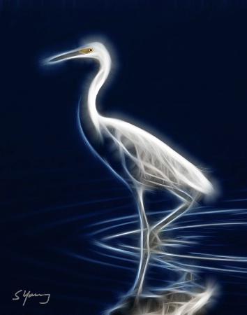 Great Egret; Chincoteague, Va