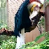 © Emile Abbott PhotoID # 14986620: Male Wreathed Hornbill