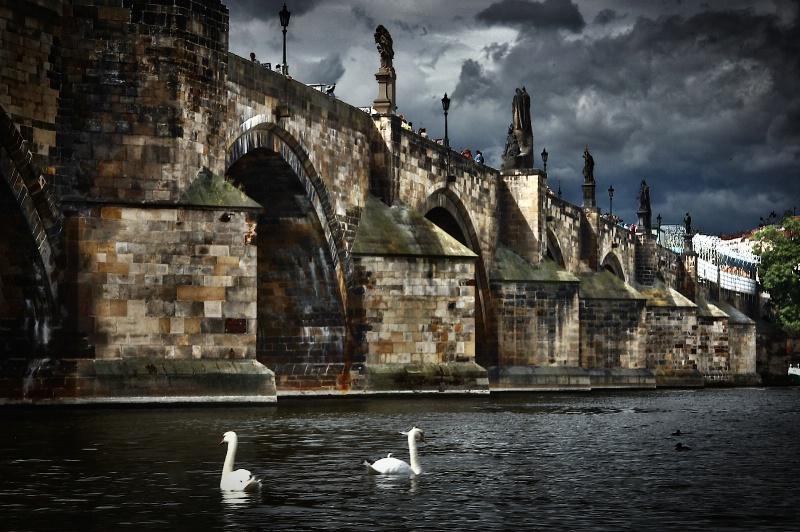 Bridge Swans and Prague - ID: 14993029 © David Resnikoff