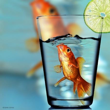 Fish and Tonic