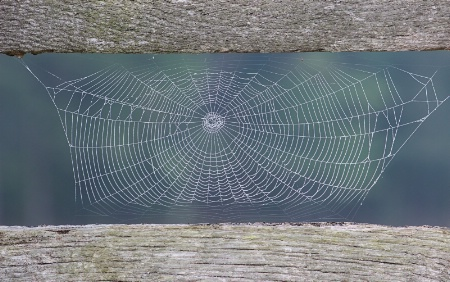 Web on the Fence