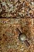 Rusted knob