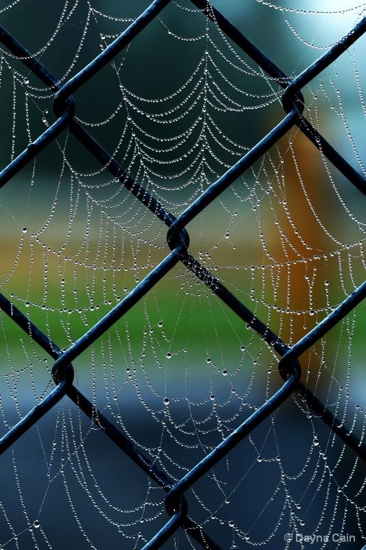 Web Jewels