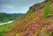 Scottish Highland...