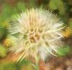 Flower Impression...
