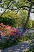 Springtime Colour