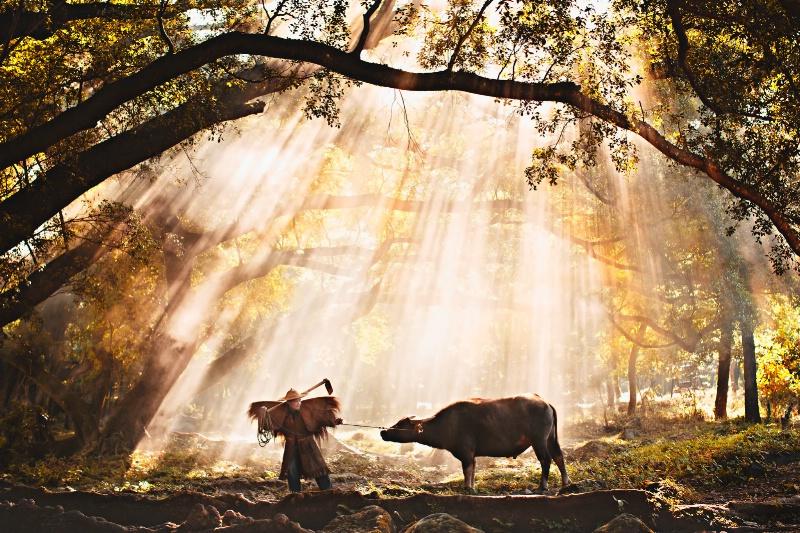 Farmer in the morning light
