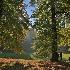 2Under the Tree - ID: 15017880 © Ilir Dugolli