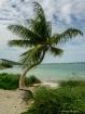 Twisted Palm
