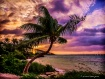 Twisted Palm Suns...