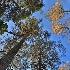 2Trees all Stand - ID: 15025415 © Ilir Dugolli
