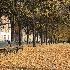 2Couple on Golden Carpet - ID: 15030568 © Ilir Dugolli