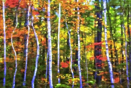 Little birch trees