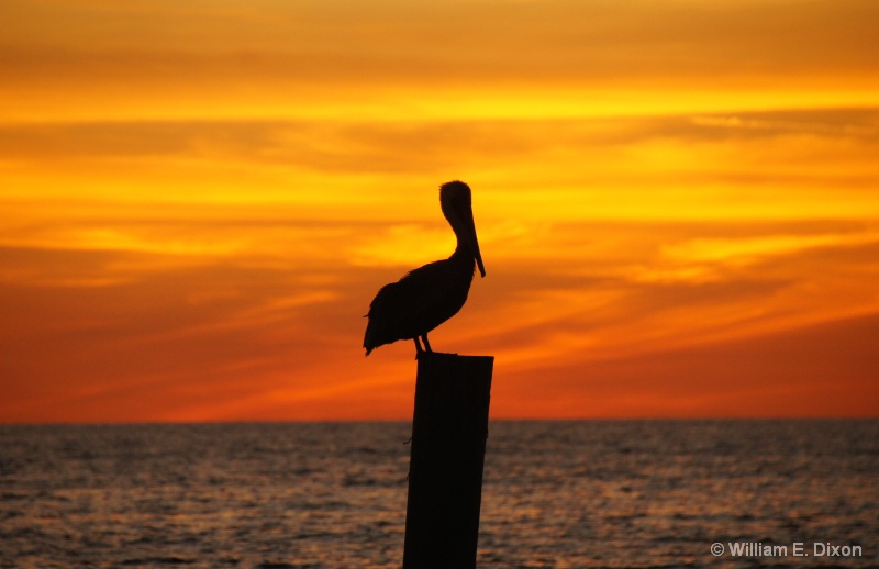 Redington Shores Sunset Pelican - ID: 15036919 © William E. Dixon