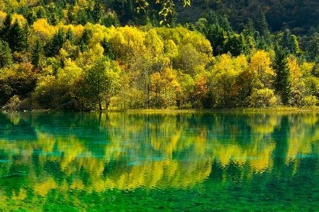 Five colors pond