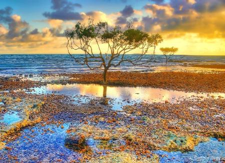 Mangrove morn